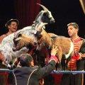 image charity_zirkus_2015056-jpg